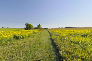 Photo of a prairie path called Bluebird Trail.