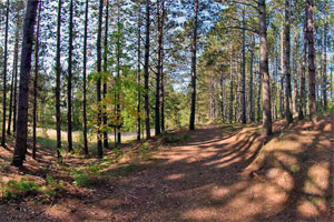 Photo of dappled sunlight covering the Tall Pine Trail at Moose Lake State Park.