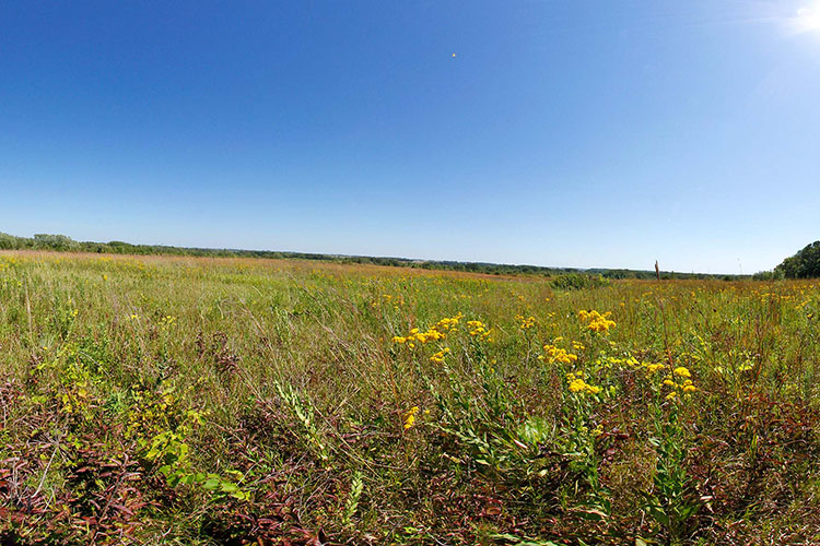 Photo of native prairie along the Blazing Star State Trail.