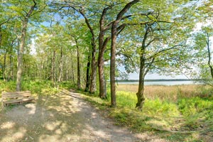 Photo of a trail allows hikers to quietly meander along some of Rice Lake's five miles of shoreline, and provides several lovely spots to stop and rest along the way.