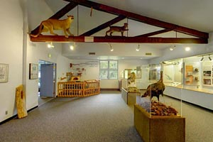 Photo of the visitor center's Discovery Room.
