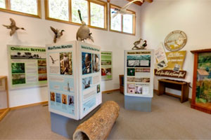 Photo of some of the exhibits inside the visitor center display room at William O'Brien State Park.