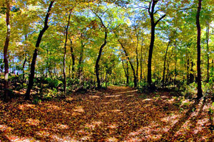 Photo of fall colors at William O'Brien State Park's Hardwood Hills Trail.
