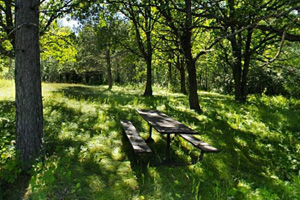 Photo of a picnic table resting in the shade of tall Norway pine and oak trees within historic Zippel Homestead.