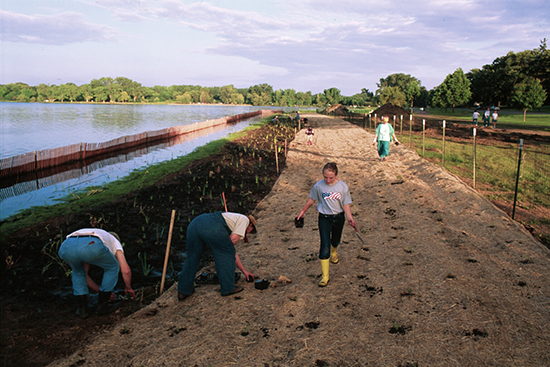 Planting of native seedlings in aquatic, wet and upland zones. Photo: Ramsey-Washington Metro Watershed District.