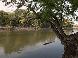 Calm river, viewed through the trees