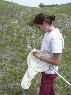 netting bees