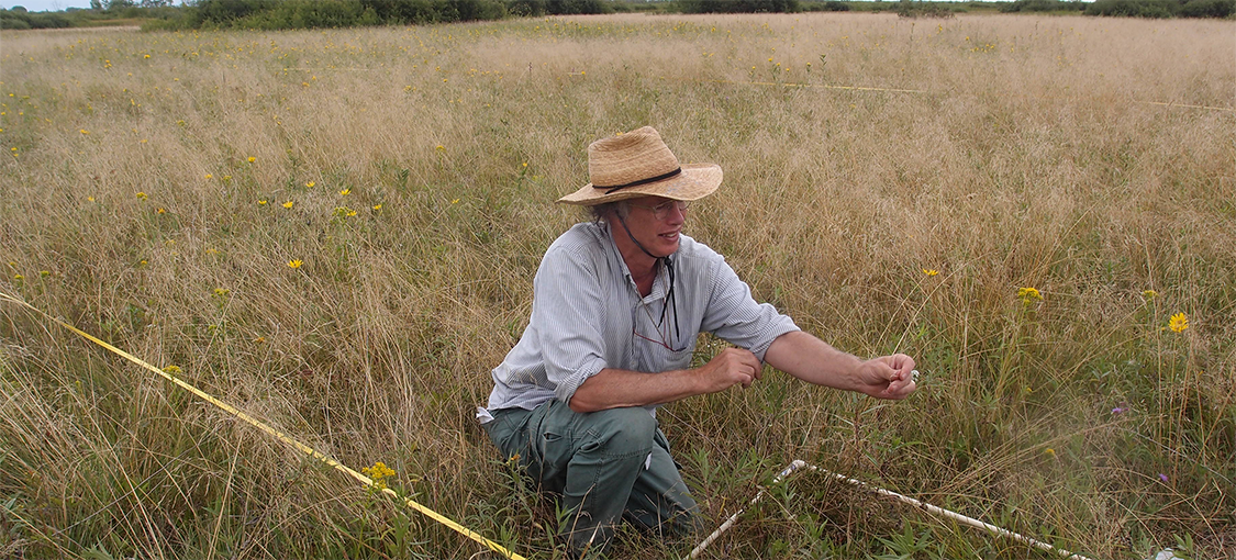 image of a quadrat plot and a plant ecologist assessing plant species abundance