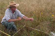 plant ecologist measuring plant abundance within a quadrat