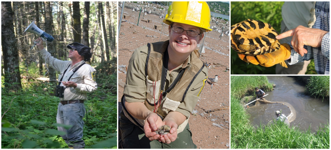 Collage of nongame wildlife program staff working with wildlife