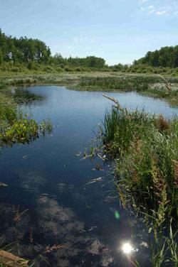 type 4 wetland