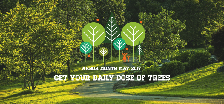 Get you daily dose of trees banner