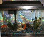 photo: Fish tank