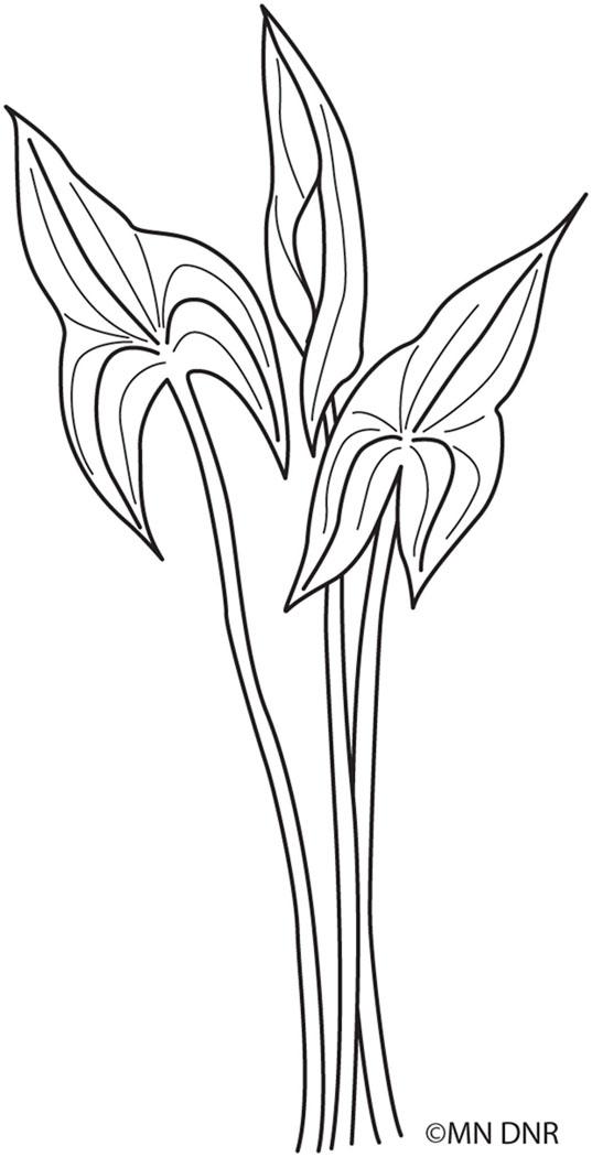 Arrowhead Outline