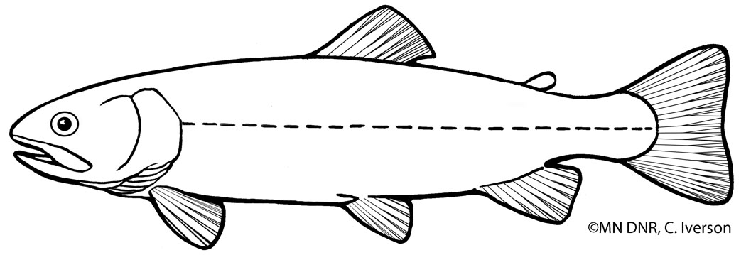 Brook Trout Outline