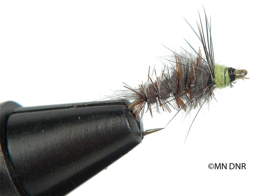 Caddisfly Larva Nymph Fly
