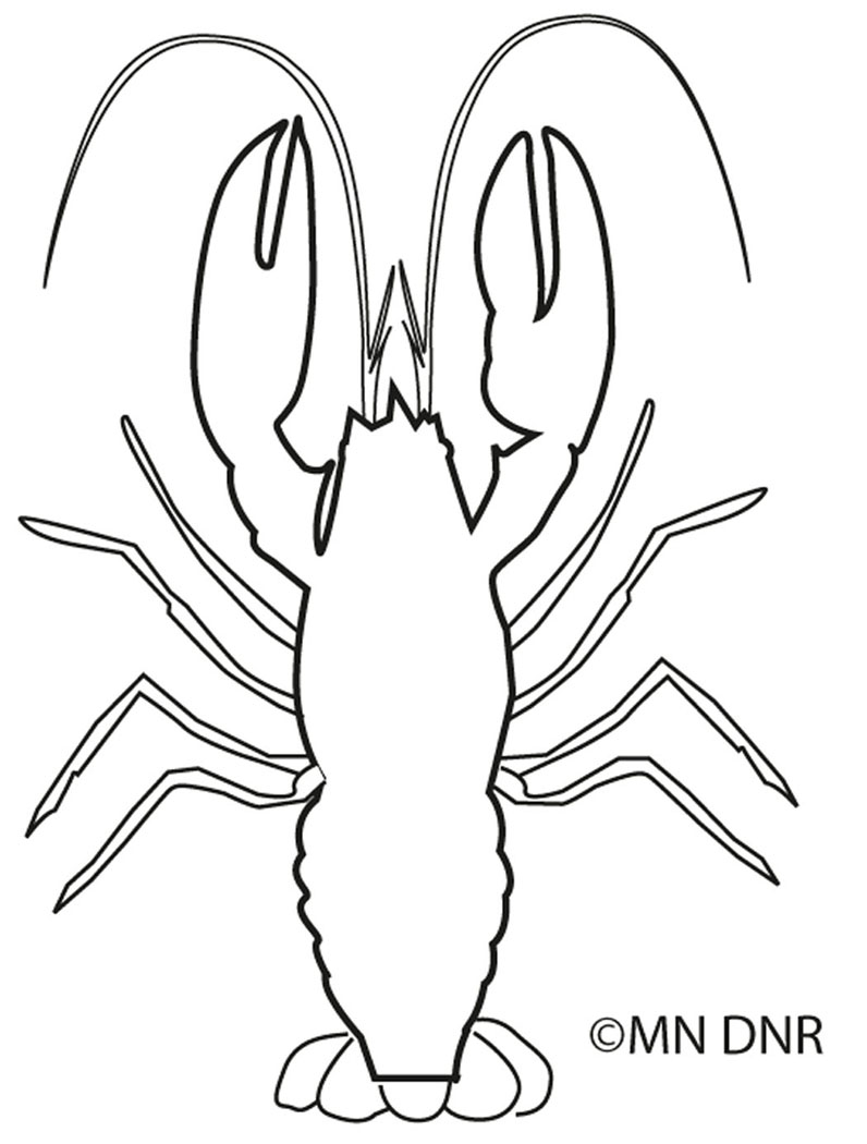 Crayfish Outline