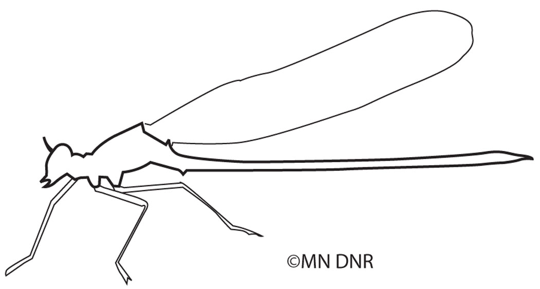 Damselfly Outline