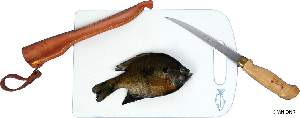 Filleting panfish step 1