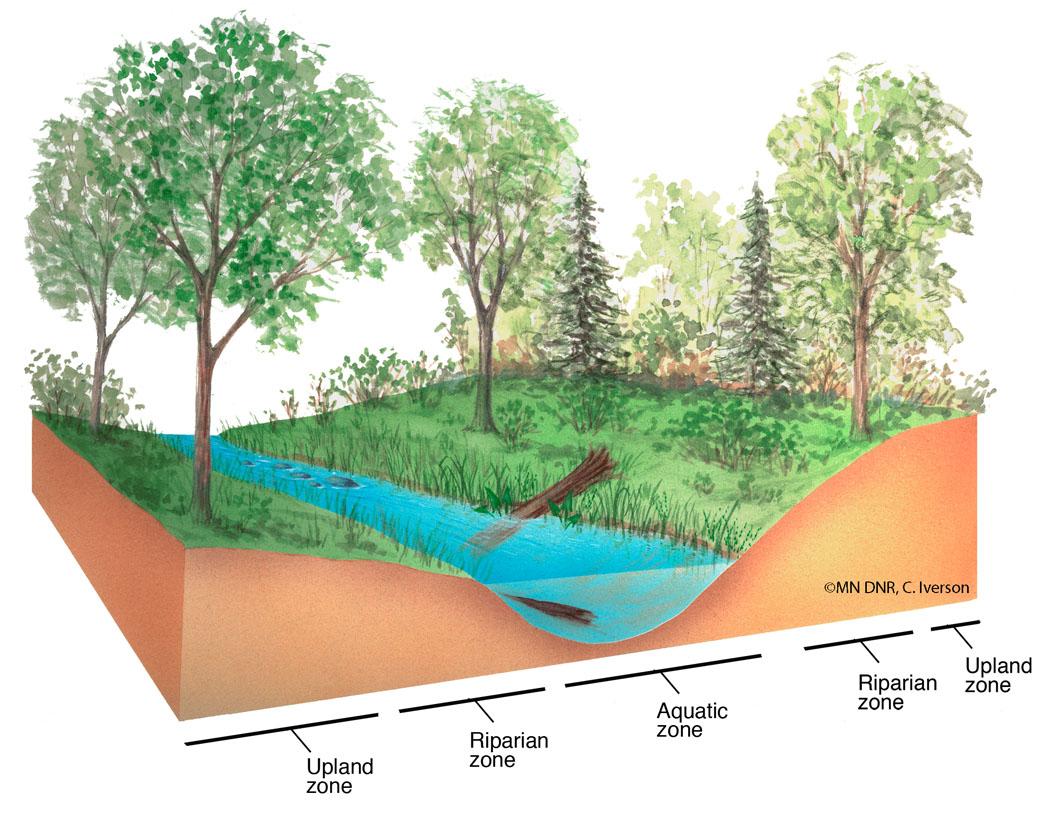 Riparian Habitat