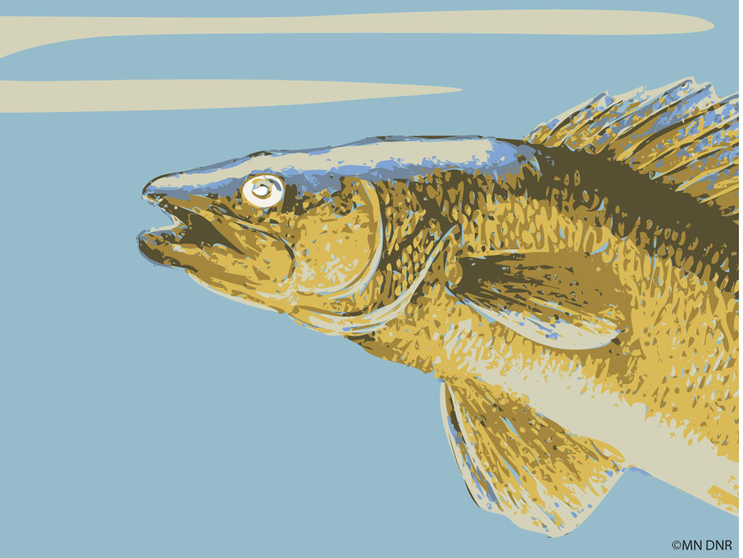 Walleye Stylized