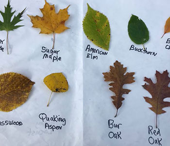 leaves from different trees label