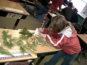 student leaning on desk with spruce branches writing