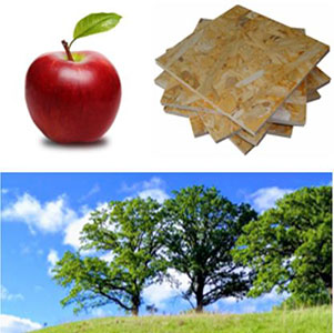 collage image of a oak trees, apple and plywood