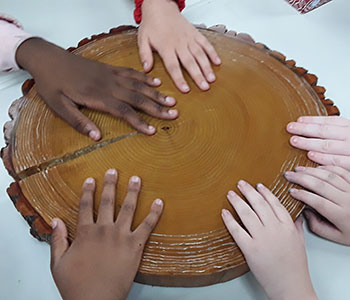 student hands on a tree cookie