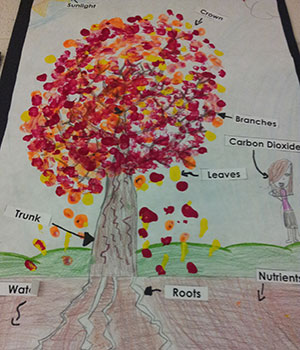student drawing of a tree showing different parts of a tree