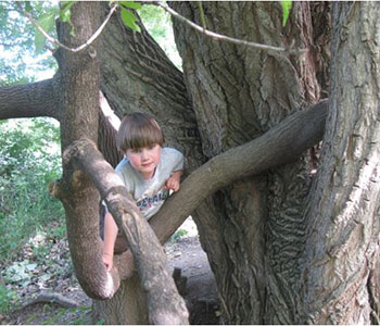 young boy hanging in a tree