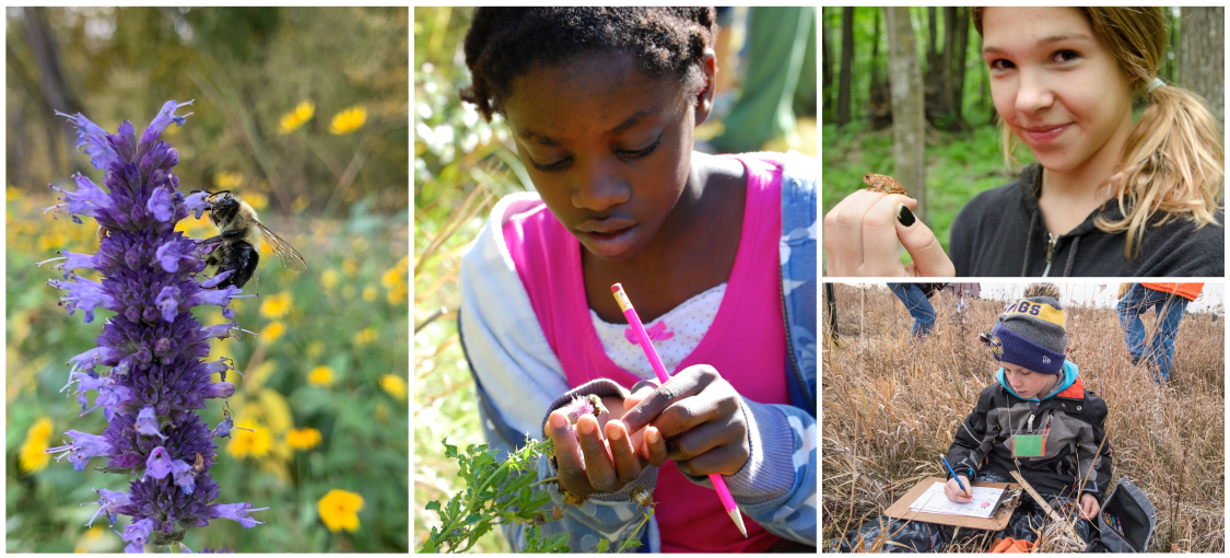 A collage of wildlife and children. On the far left is a picture of a bumblebee on a flower. In the middle is a child looking at a berry. On the right are two images, one of a child smiling at the camera with a frog on their hand and the second is a child in a field looking at a clipboard.