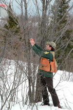 image of MN DNR forester