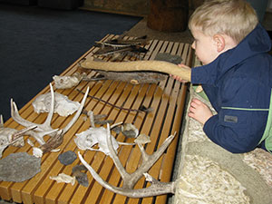 boy sitting at table with skulls, deer horns