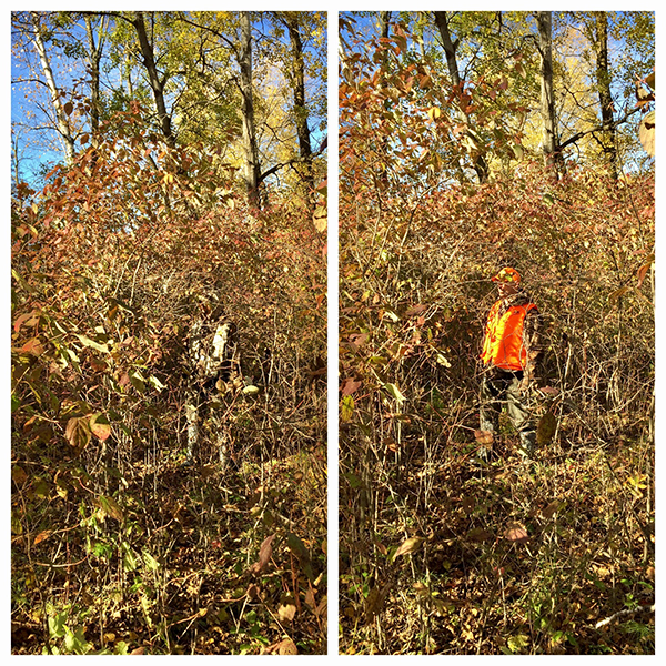 comparing person weargin blaze orange and camo