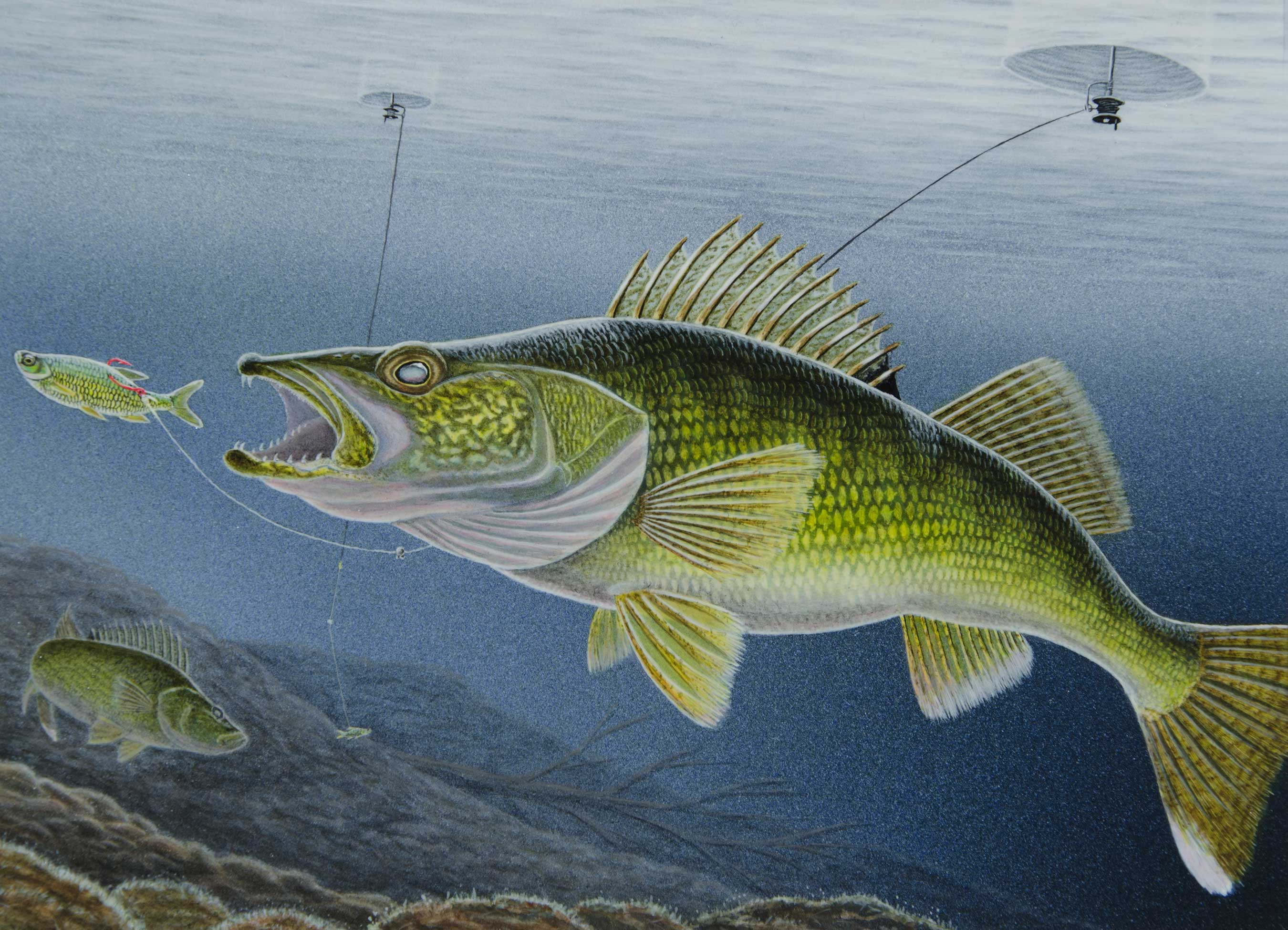 The 2020 walleye stamp