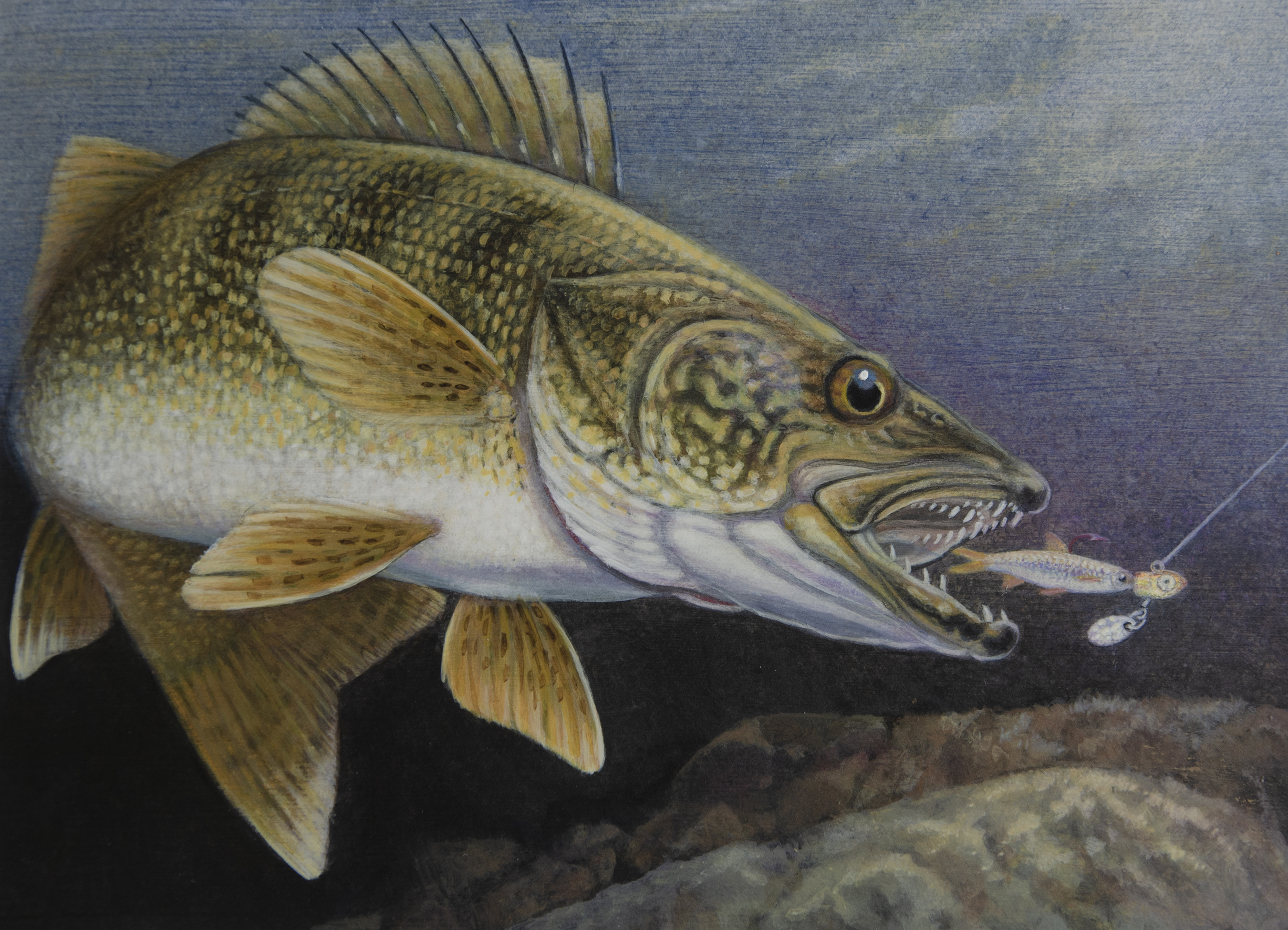 The 2021 walleye stamp