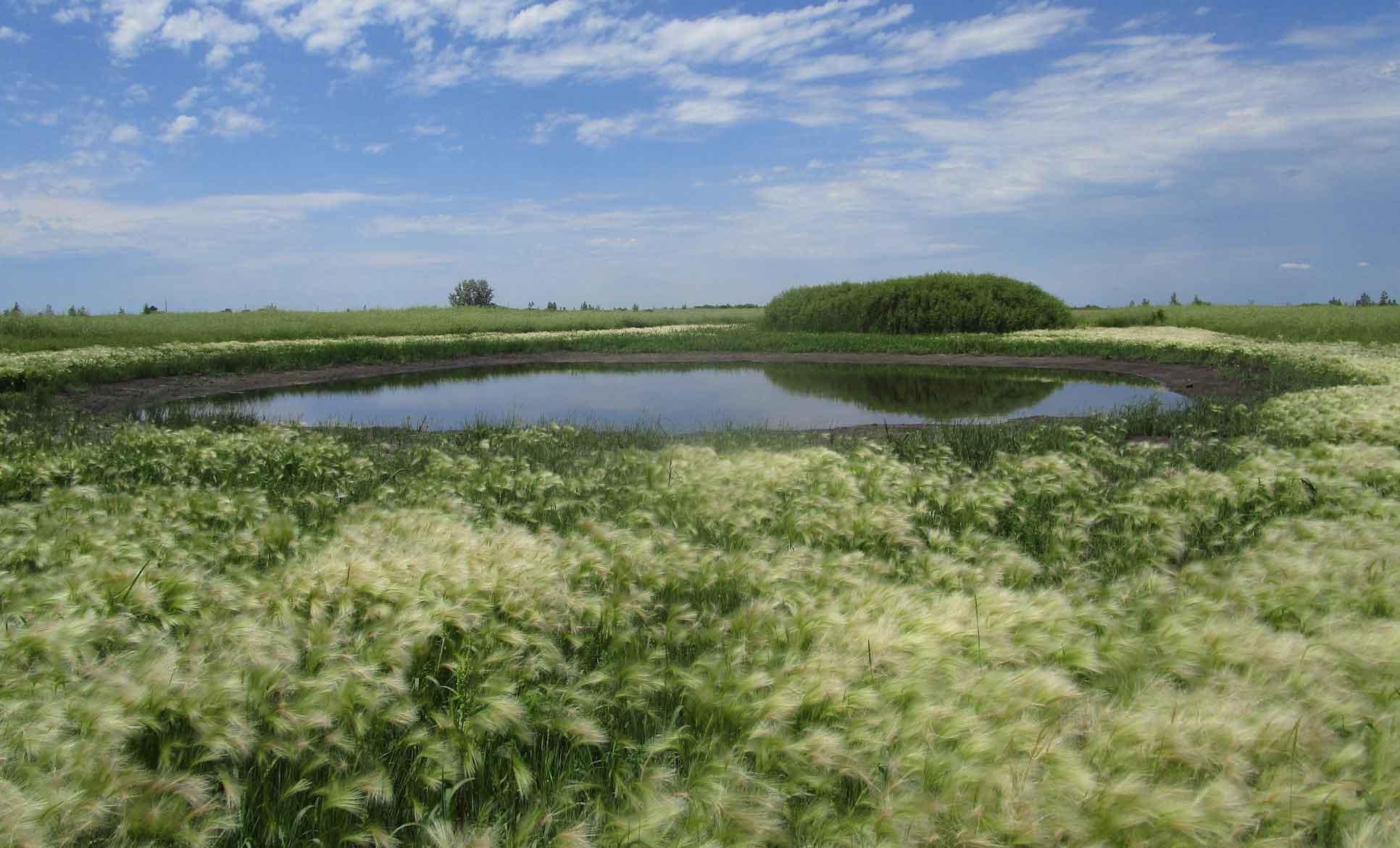 habitat photo of grassland with a shallow lake
