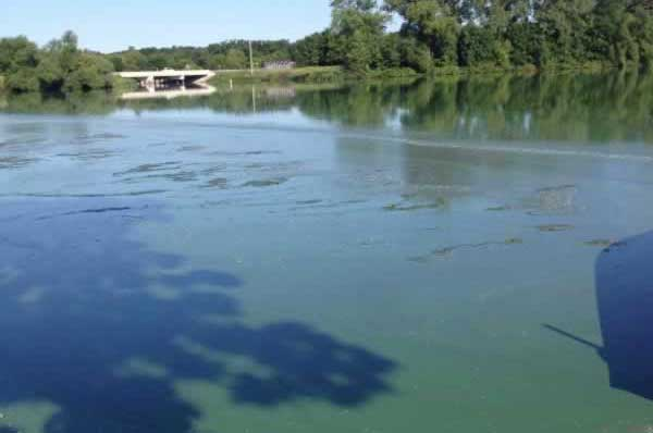 The drawndown of Lilttle Rock Lake is expected to reduce algae growths such as this.