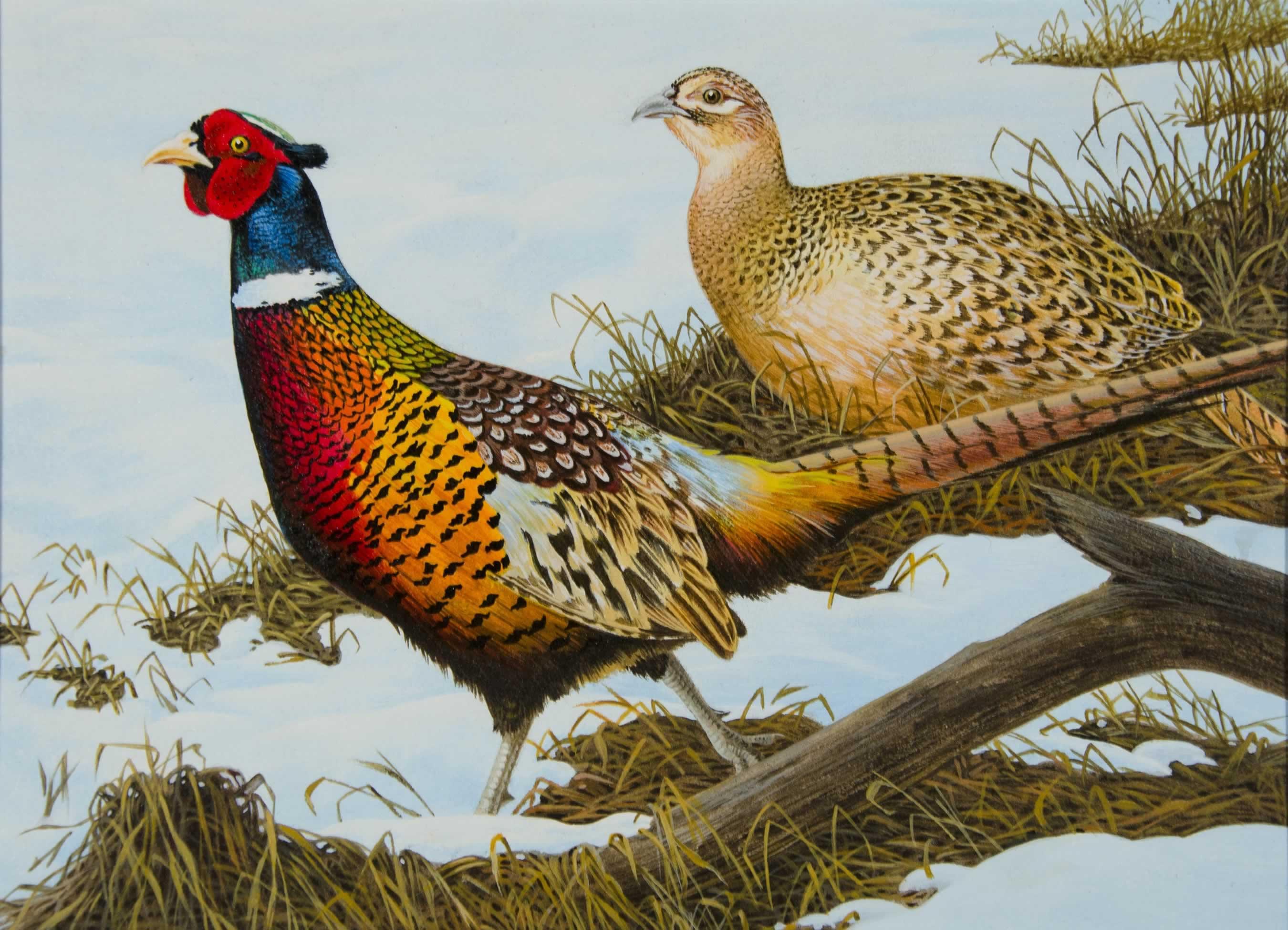 The 2019 Minnesota pheasant stamp