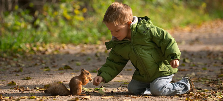 Boy feeding a wild squirrel