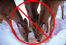 Red strike through over image of three deer eating corn from a hole in the snow.