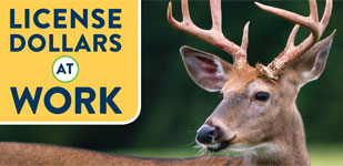 Learn how your hunting license dollars work for you and the outdoors