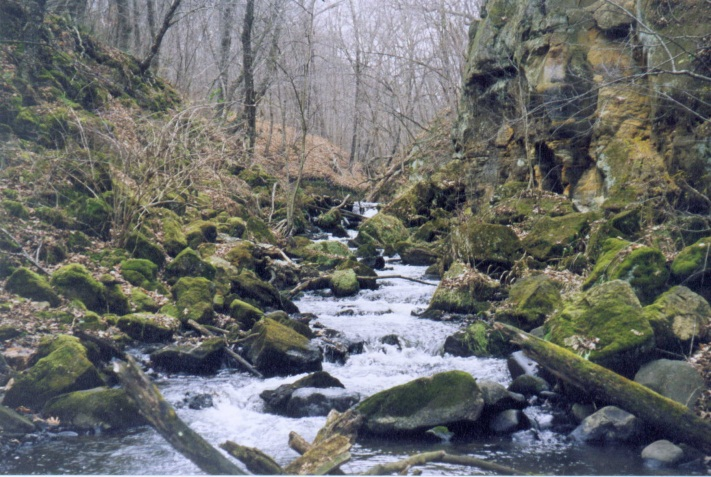Image of a trout stream