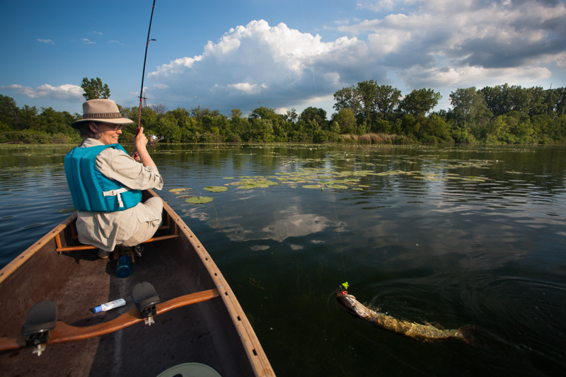 A paddler in the bow of a canoe lands a northern pike on the Mississippi River.