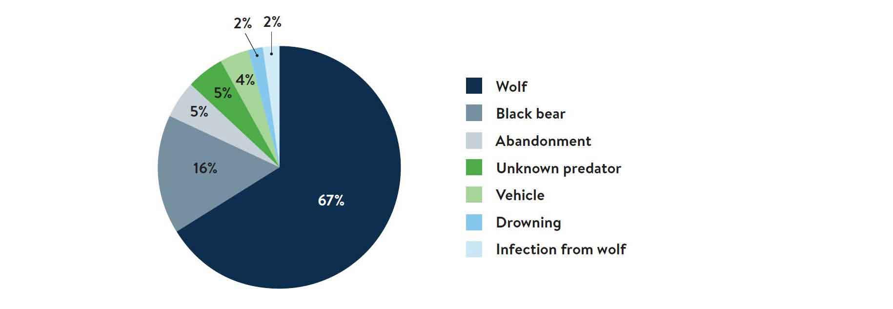 Causes of moose calf mortality 2013-2016