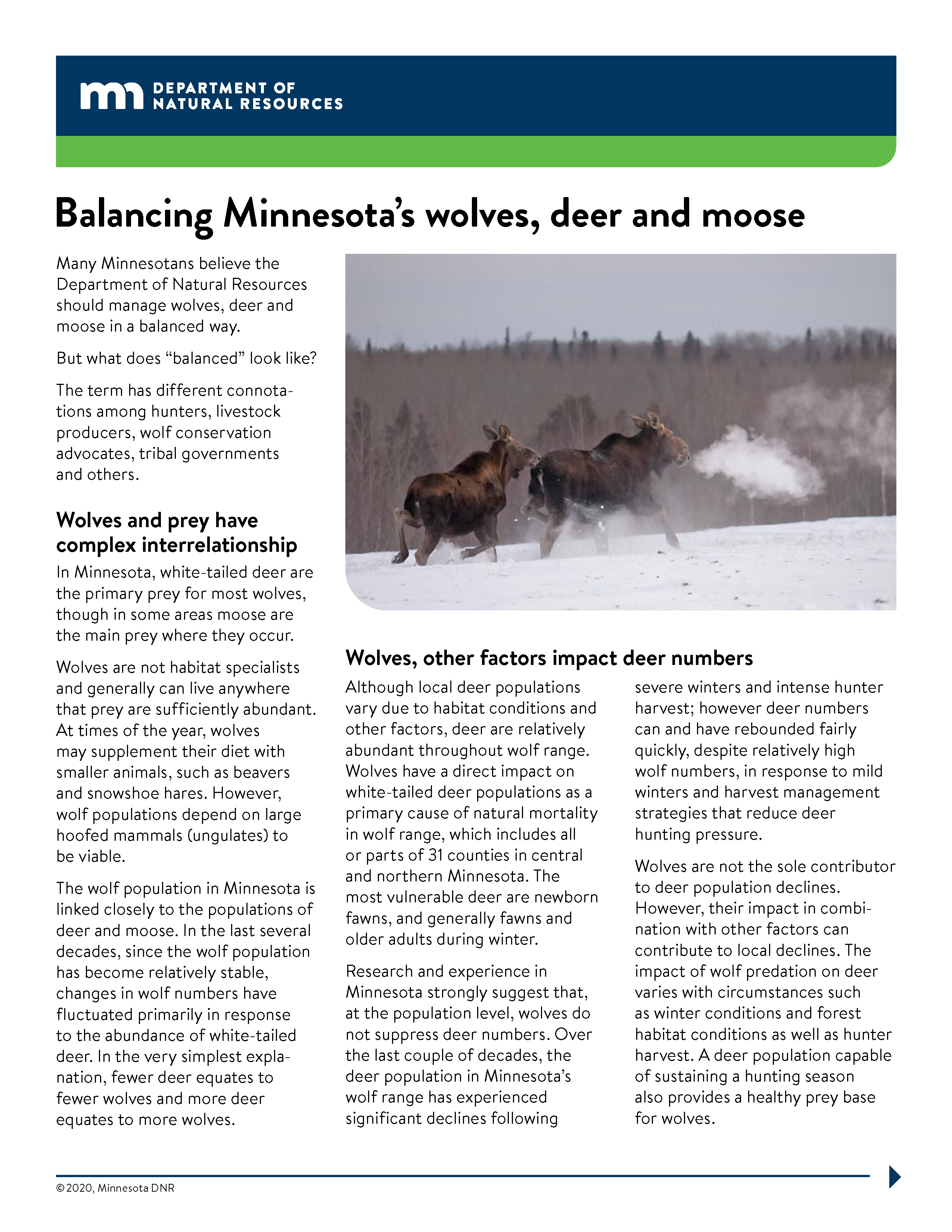Image of the wolf, moose and deer fact sheet