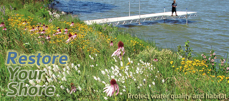 Image showing showing wildflower buffer with Restore Your Shore and Protect water quality habitat overlaid.
