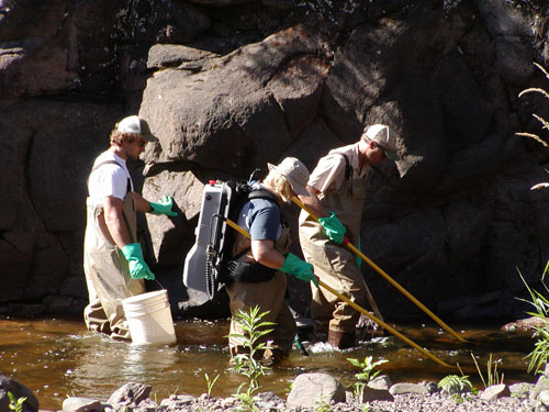 A Duluth area fisheries crew electro-fishes during a population assessment of a North Shore stream.