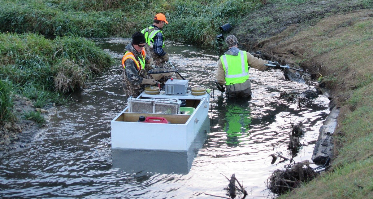 Lake City area staff electro-fishing during an assessment on a designated trout stream where recent habitat work occurred.